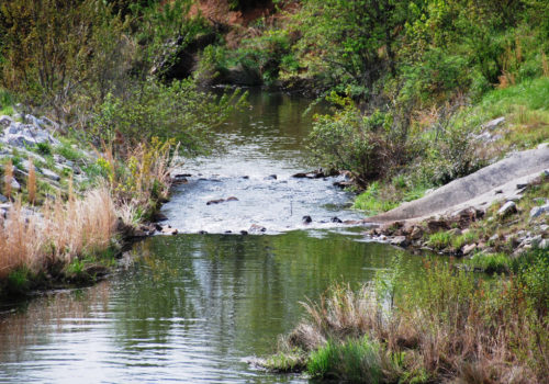 Tribble Mill Park river