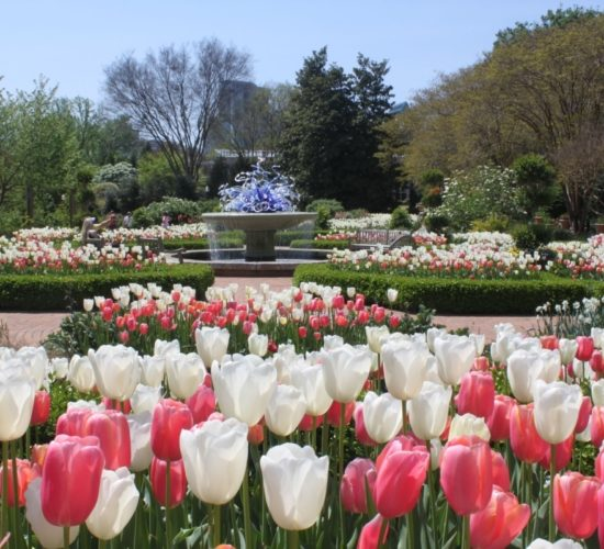 Explore Gwinnett Atlanta Botanical Garden