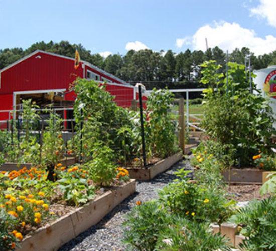 cityservices.recreationparks.white-street-park harvest-farm