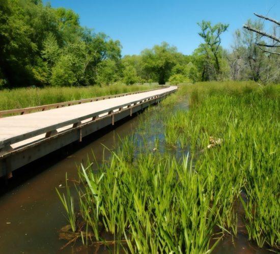 Ivy Creek Greenway