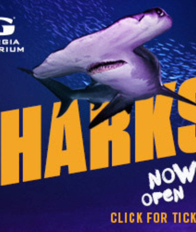 20 AQUA2775 Sharks Now Open 300x250